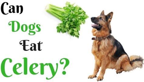 can dogs eat kale can dogs eat vegetables like celery asparagus lettuce cabbage dan kale