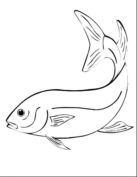 coloring pages of parrot fish parrot fish drawing at getdrawings com free for personal