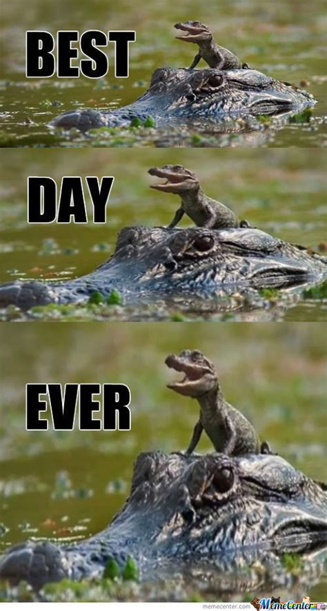 Alligator Meme - alligator memes best collection of funny alligator pictures