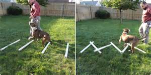 Erie sisti bull diy agility equipment part ii ladders dog walk and