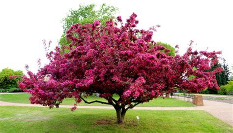 Fleurs De Printemps by Fleurs De Printemps Une S 233 Lection Des Plus Belles Fleurs