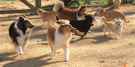 puppy play dates per your pets fairfield residential