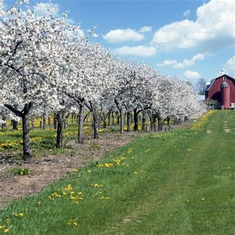Cherry Orchards In Door County Wi by 17 Best Images About Door County On Door