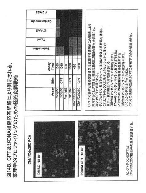 t j c 3 92 94 薬理学的プロファイリングのための蛋白 蛋白相互作用