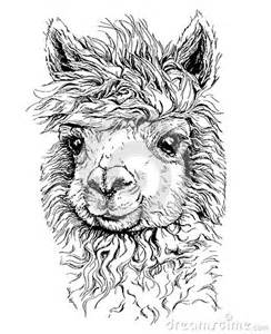realistic sketch of lama alpaca black and white drawing