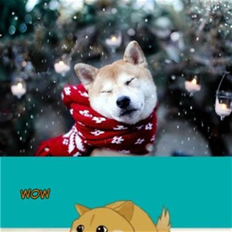 Doge Meme Christmas - christmas doge by ifreet meme center