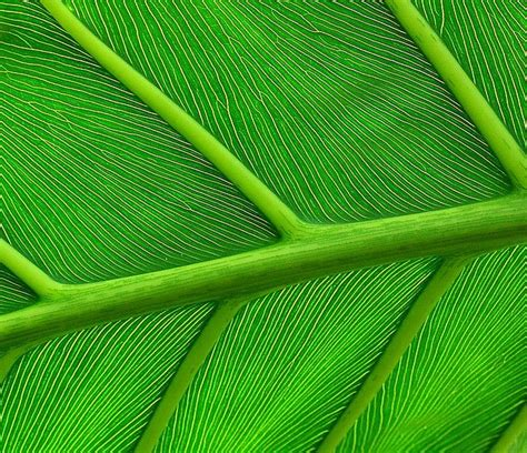 nature pattern pinterest patterns in nature leaves hojas pinterest