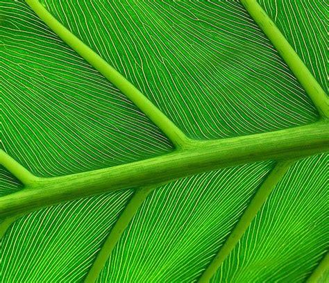 patterns in nature leaves patterns in nature leaves hojas pinterest
