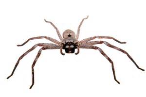 Spiders In 7 Most Terrifying Spiders In Africa