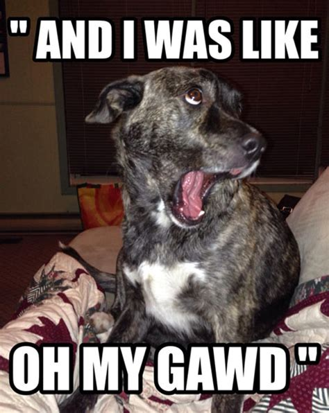 Dog Face Meme - funny dog faces with quotes quotesgram