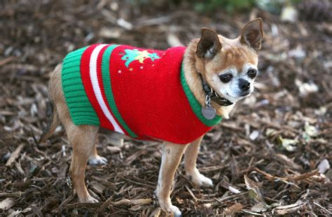 Garage With Apartment Above Cats Dogs Party Like Animals In Ugly Sweaters The Columbian
