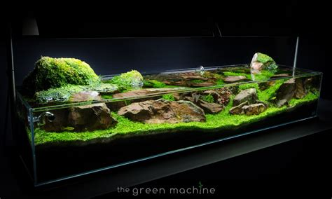 Green Machine Aquascape aquascape tutorial guide continuity by findley the green machine