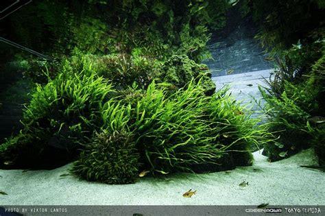 design aquascape online sumida aquarium reloaded oleh viktorlantos aquascape
