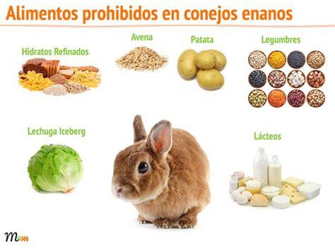 alimentos prohibidos para el c m 225 s de 25 ideas incre 237 bles sobre conejitos enanos en