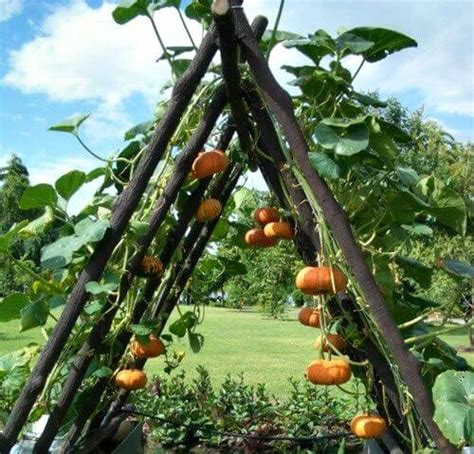 vegetable garden in small space small space vegetable gardening