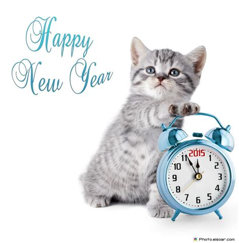 the year of the cat new year top 2015 new year s photos best ideas elsoar