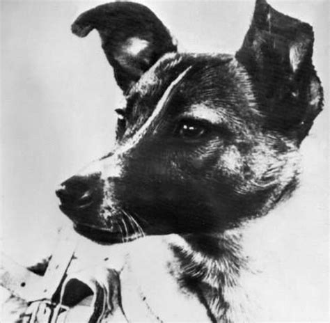 laika the in space scientist recalls laika for space