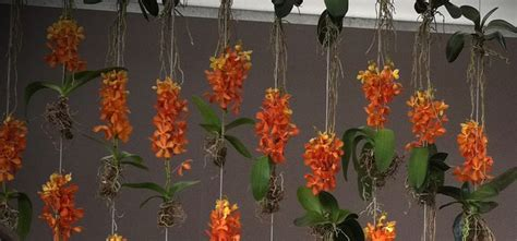 durie vertical gardens orchid wall by durie gardens and so on
