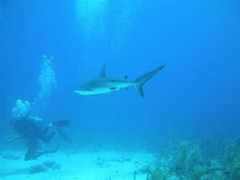 catamaran charter exumas exumas bahamas snorkeling itinerary aboard charter