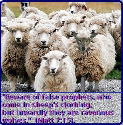 in sheep s clothing all about covert narcissists books in sheep s clothing identifying the tactics of