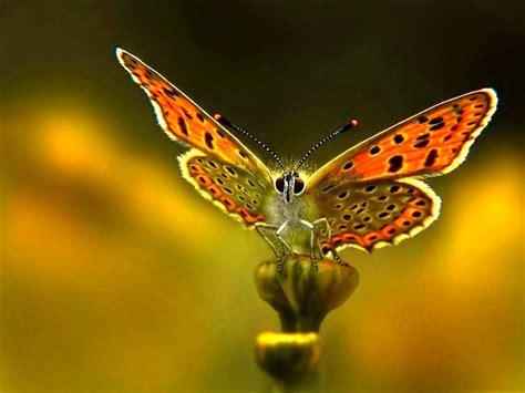 imagenes de mariposas de verdad mayo 2014 revistaliterar1