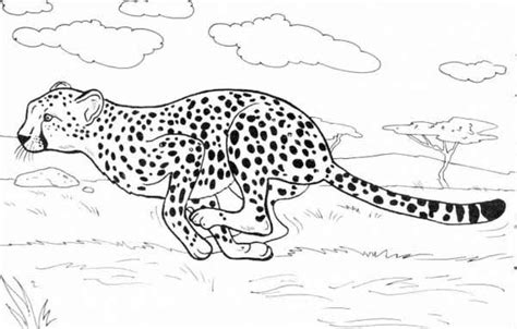 cheetah coloring pages cheetah coloring pages gianfreda net