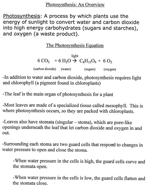 Photosynthesis Review Worksheet by Overview Of Photosynthesis Review Worksheet Overview Of
