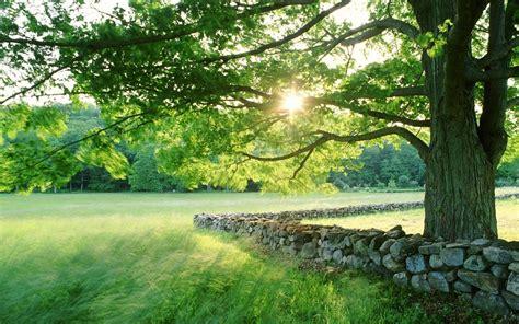 paysages de nature chs arbres d herbe soleil soleil