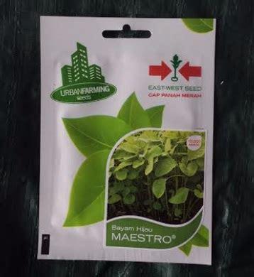 Murah Benih Bayam Hijau Maestro benih panah merah bayam hijau maestro 10 000 biji jual tanaman hias