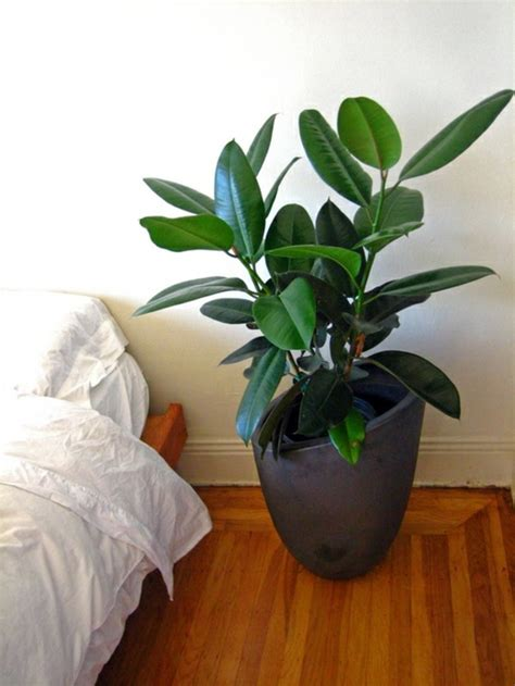 easy house plants green house plants flowering easy care potted plants