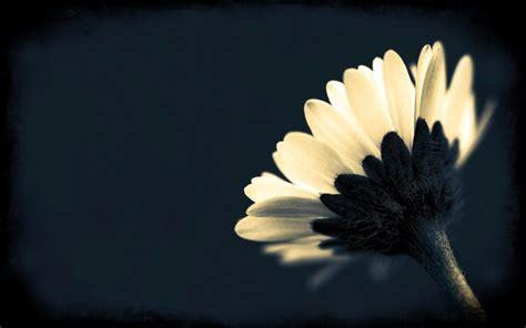 Desktop Wallpaper Black And White Flowers | black and white flower desktop background joy studio