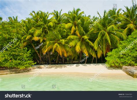 overdue in paradise the library history of palm county books beautiful tropical paradise maldives coco palms stock