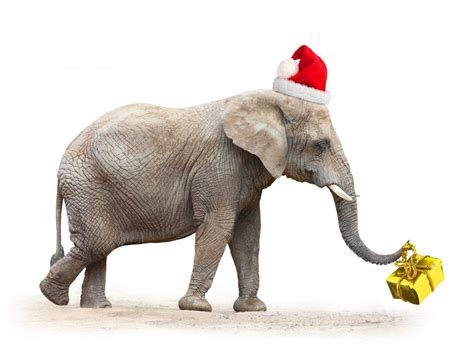 images of christmas elephants how to play white elephant gift exchange game on family