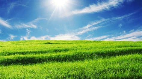 Blue Light Iphone Green Green Meadow Wallpapers Wallpapersafari