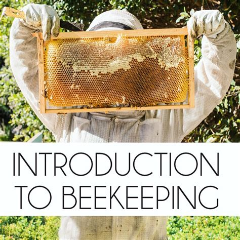 the backyard beekeeper 4th edition an absolute beginner s guide to keeping bees in your yard and garden books beekeeping like a introduction to beekeeping class