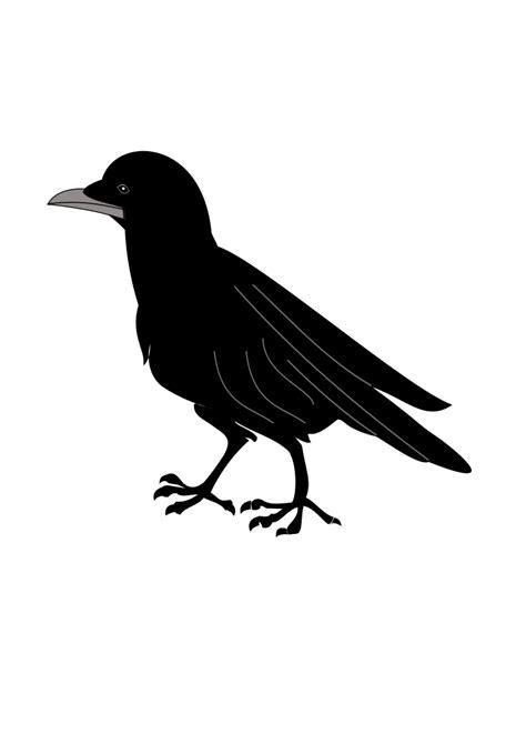 Fichier:Corneille.svg — Wikipédia