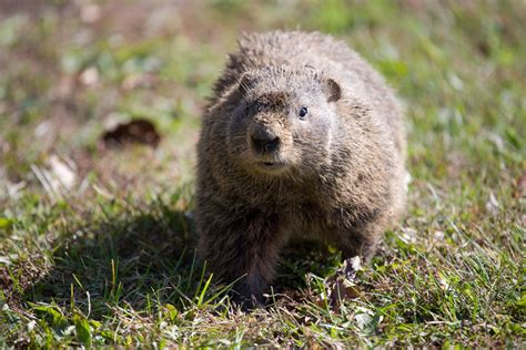 i have a groundhog in my backyard 100 i have a groundhog in my backyard tree to river