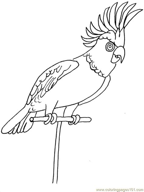 tropical birds coloring pages coloring home