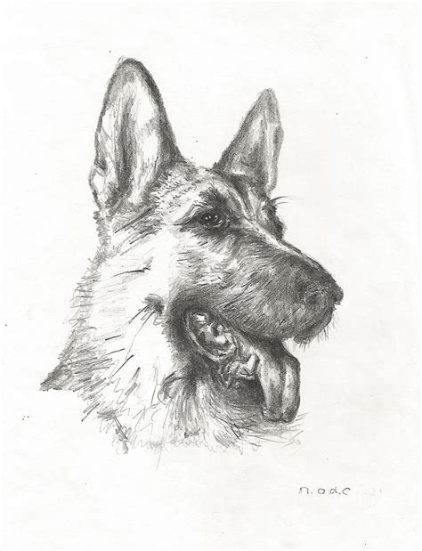 german shepherd puppy drawing 7 easy step by step tutorials on how to draw a german shepherd or puppy