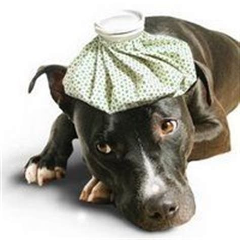 can dogs fevers can i give my fever reducer how to handle fido s fever