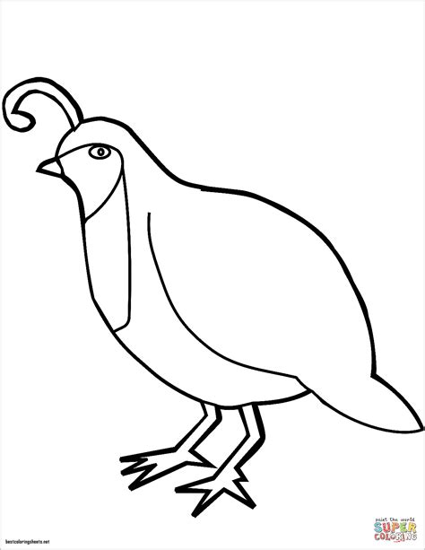 california quail coloring page free q for quail coloring