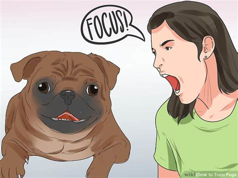 how to clean a pugs nose how to pugs with pictures wikihow