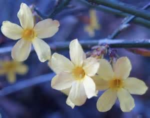 march in bloom shrubs ramblin through dave s garden