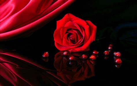 wallpaper for desktop red roses red roses most popular rose rose wallpapers beautiful