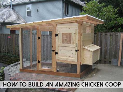 build  amazing chicken coop shtf prepping central