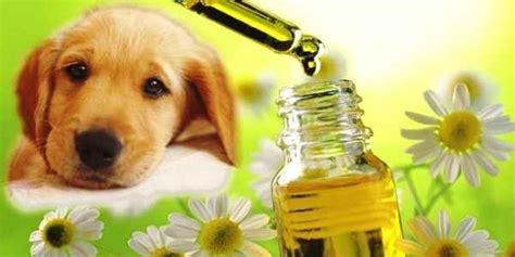 fiori di bach per gatti fiori di bach un aiuto per cani paurosi aggressivi e