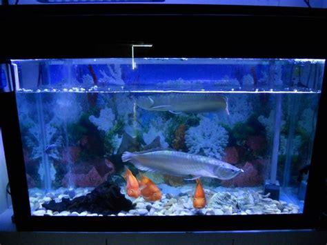 Lu Led Aquarium Laut led acquario led acquario tipologie e