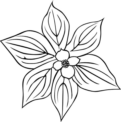 coloring pages of dogwood flowers creeping dogwood coloring page clip at clker