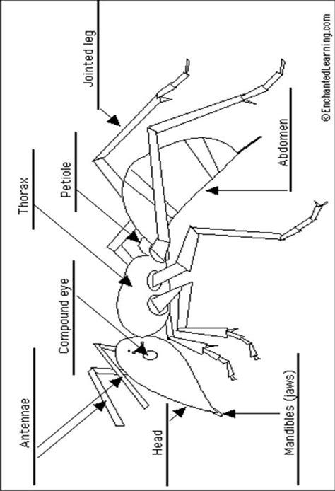 ant diagram ants parts colouring pages
