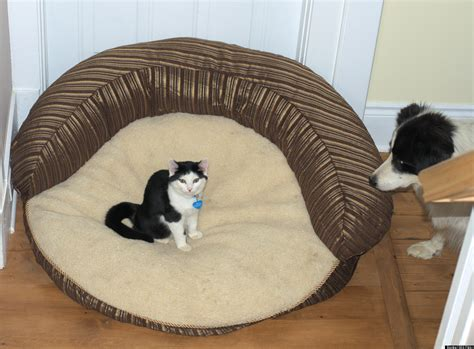 cats in dog beds stolen dog beds 21 pets who have had their favorite spots